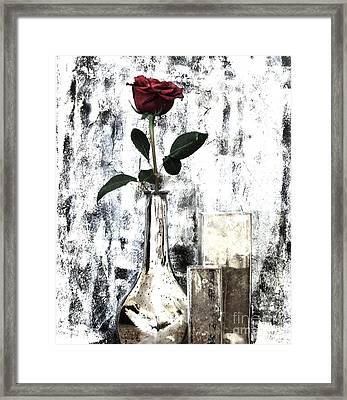 Burgundy Beauty Rose Framed Print by Marsha Heiken