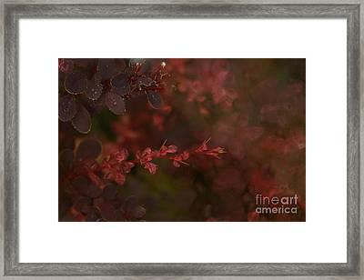 Burgundy Branch Framed Print by Jennifer Apffel
