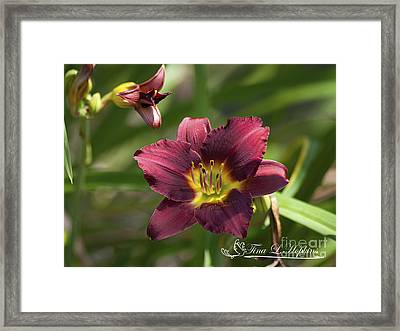 Framed Print featuring the photograph Burgundy Day Lily 20120706_24 by Tina Hopkins