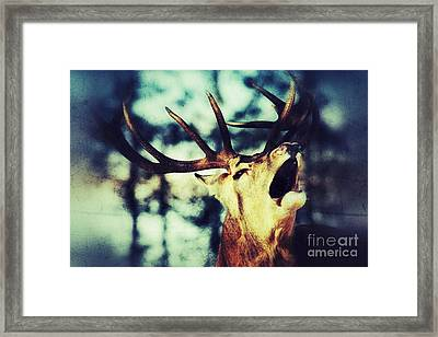 Framed Print featuring the photograph Burling Deer by Nick  Biemans