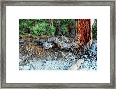 Burly Framed Print by Donna Blackhall