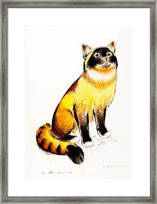 Burmese Cat Framed Print by Kurt Tessmann