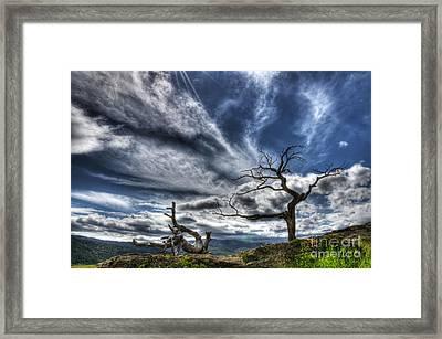 Burmis Tree Crowsnest Pass Framed Print by Bob Christopher