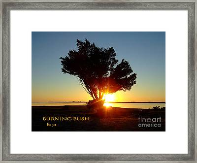 Framed Print featuring the photograph Burning Bush by Bob Sample