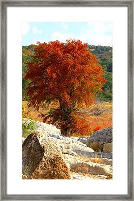 Framed Print featuring the photograph Burning Cypress by David  Norman