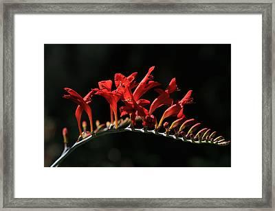 Burning Flames Framed Print