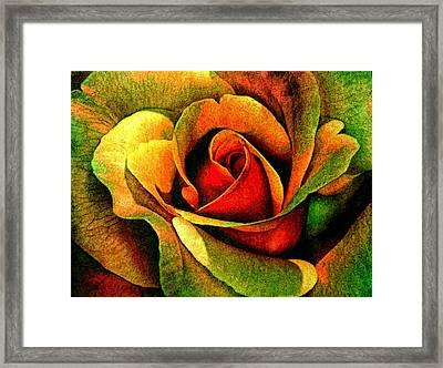 Burning Rose Of Autumn Framed Print
