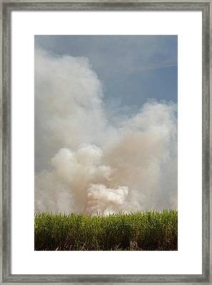 Burning Sugar Cane Framed Print