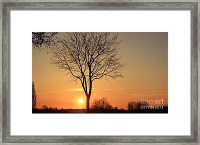 Burning Tree In The Sunrise Framed Print