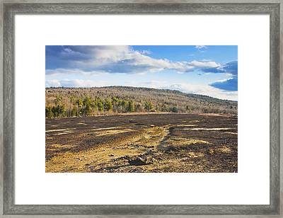 Burnt Blueberry Field In Maine Framed Print