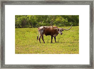 Burnt Orange Longhorn Framed Print by Mark Weaver