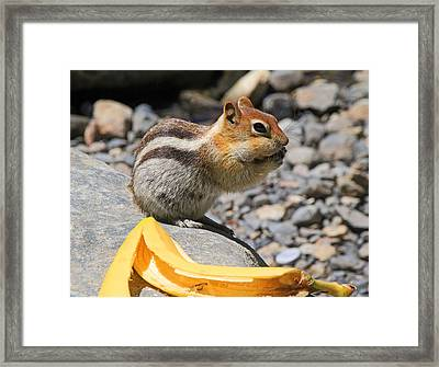 Burp... What Banana ?... Framed Print by Donna Kennedy