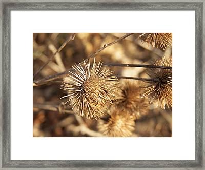 Burr Macro Framed Print by Corinne Elizabeth Cowherd