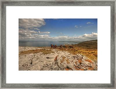 Burren Donkeys Framed Print by John Quinn