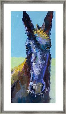 Burro Stare Framed Print by Diane Whitehead
