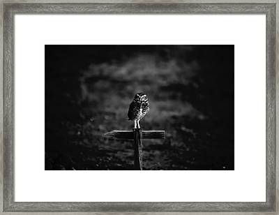 Burrowing Owl At Dusk Framed Print