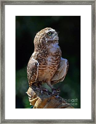 Framed Print featuring the photograph Burrowing Owl by Debby Pueschel