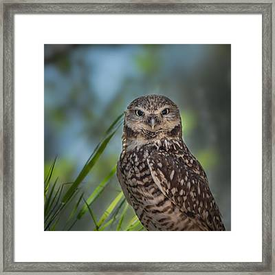 Burrowing Owl Framed Print