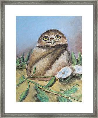 Burrowing Owl Of Cape Coral  Framed Print