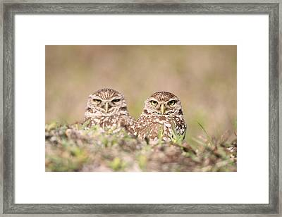 Burrowing Owl Pair Framed Print
