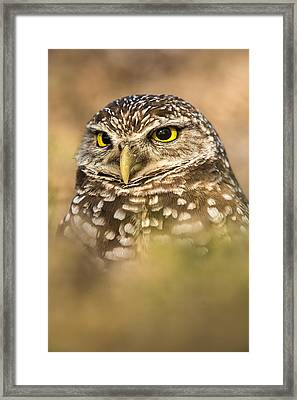 Burrowing Owl Portrait Framed Print