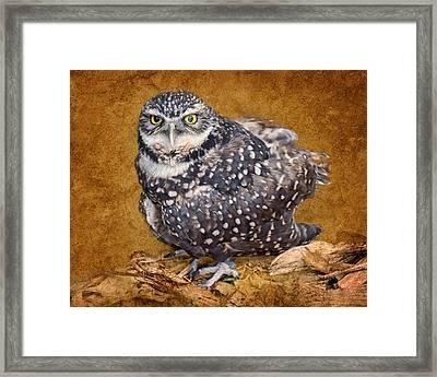 Burrowing Owl Portrait Framed Print