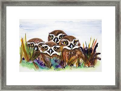 Burrowing Owls Framed Print by Dale Bernard