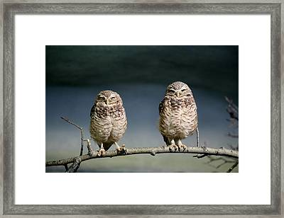 Burrowing Owls Framed Print by Larry Trupp