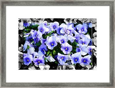 Burst Of Blue - B Framed Print