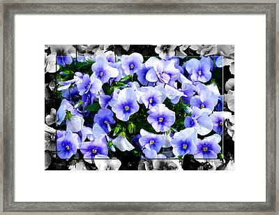 Burst Of Blue - B Framed Print by Robert Clayton