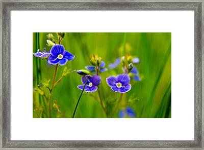 Burst Of Blue Framed Print by Kim Lagerhem