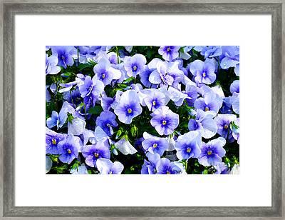 Burst Of Blue Framed Print