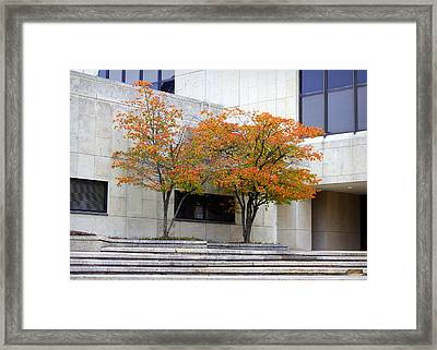 Framed Print featuring the photograph Burst Of Color by Viviana  Nadowski