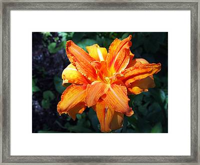 Framed Print featuring the photograph Burst Of Orange In The Garden by Deborah Fay