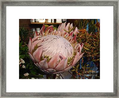 Burst Of Pink  Framed Print by Cathy Dee Janes