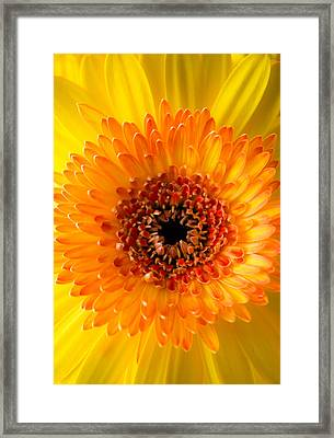 Burst Of Sunshine Framed Print by Shelby  Young