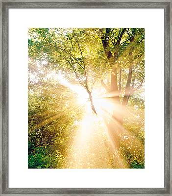 Burst Of White Light Through Green Trees Framed Print by Panoramic Images