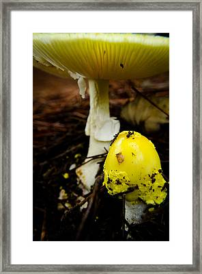 Bursting Forth Framed Print by Kristie Kulp