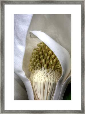 Bursting Inside Framed Print by JC Findley