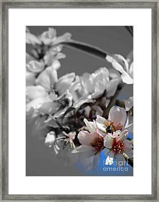 Bursting Into Spring Framed Print by Clare Bevan
