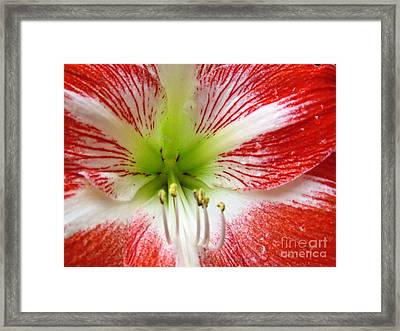 Bursting Into Spring Framed Print by Ella Kaye Dickey