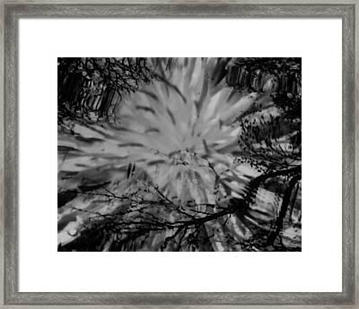 Bursting Framed Print by Lori Bourgault