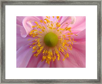 Windflower Framed Print by Cheryl Hoyle