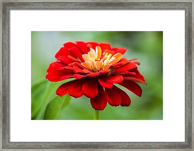 Bursts Of Color Framed Print