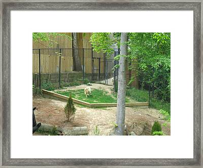 Busch Gardens - Animal Show - 121231 Framed Print by DC Photographer
