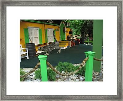 Busch Gardens - Animal Show - 121239 Framed Print by DC Photographer