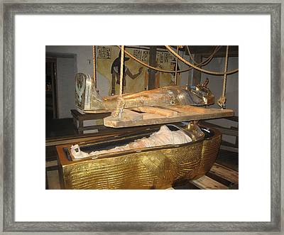 Busch Gardens Tampa - 011310 Framed Print by DC Photographer