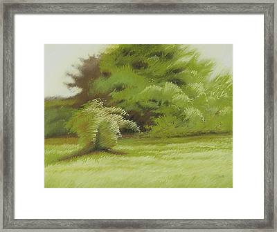 Bush And Brush Framed Print by Bruce Richardson