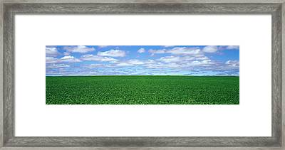 Bush Bean Field, Mcminnville, Oregon Framed Print by Panoramic Images