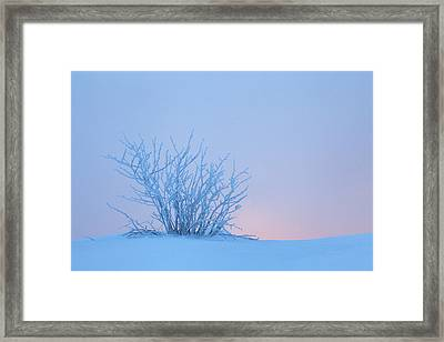 Bush In Snow In Morning Vosges France Framed Print by Heike Odermatt